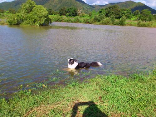 台風後の吉井川1