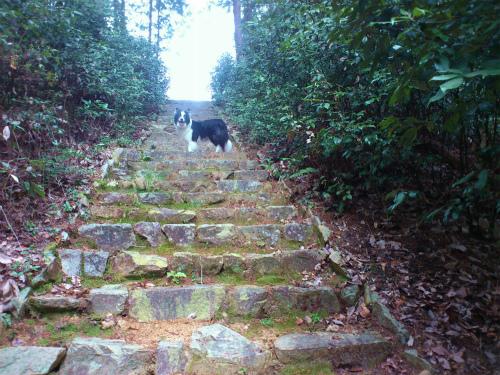 階段の途中