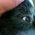 目の上のダニ2