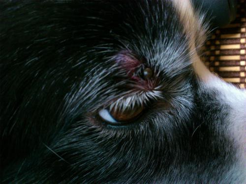 目の上のダニ3