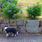 紫陽花、瀬戸運動公園