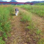 熊山河川敷