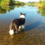 熊山河川敷川を見る