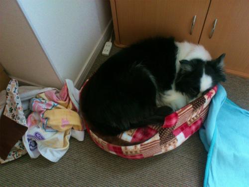 洗濯前のベッド