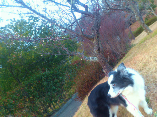 梅とクローバー