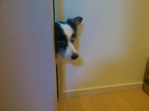 扉から出れない