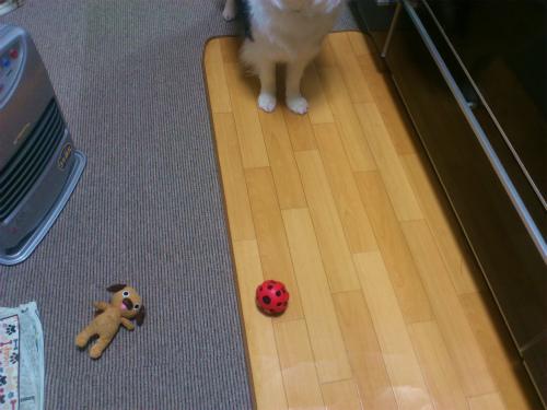 おもちゃ持ってくる
