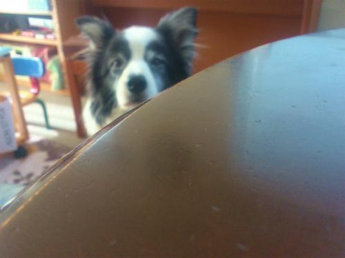 机で見てる